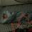 一方、翠くんはテントで熟睡中。自分で膨らませた「neos エアウェーブマット・DUO」の上で、どんな夢を見ているのかな?